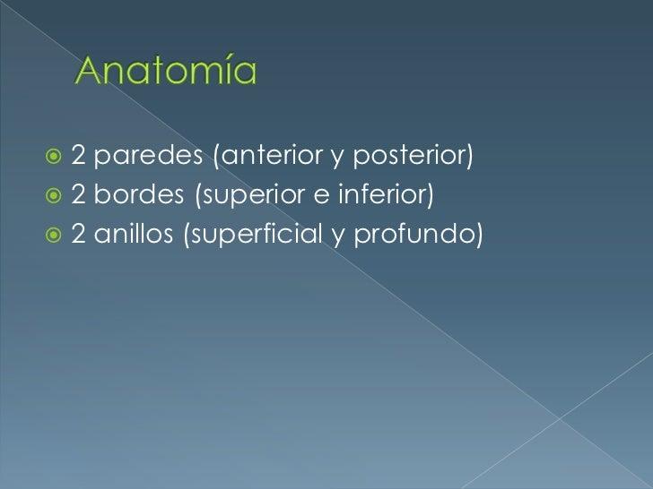 Anatomía<br />2 paredes (anterior y posterior)<br />2 bordes (superior e inferior)<br />2 anillos (superficial y profundo)...