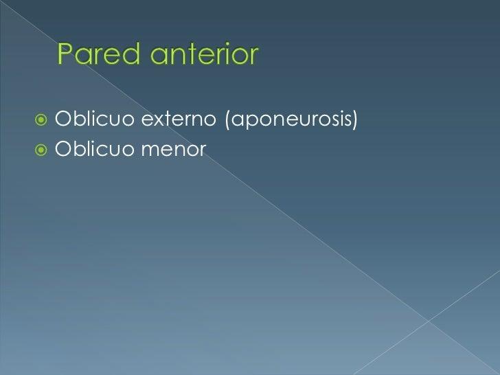 Pared anterior<br />Oblicuo externo (aponeurosis)<br />Oblicuo menor<br />