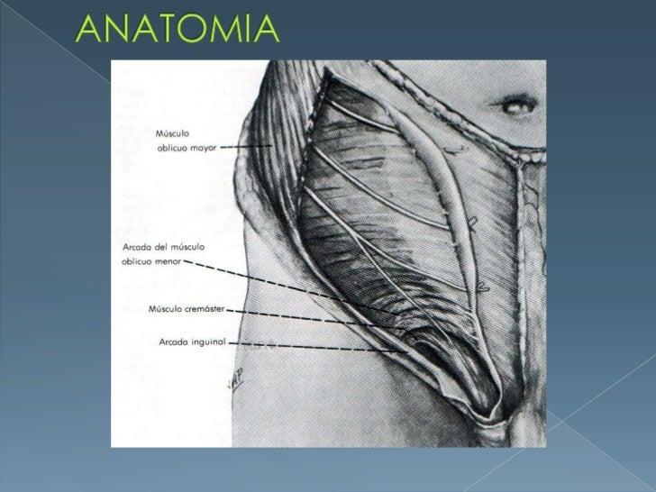 ANATOMIA<br />