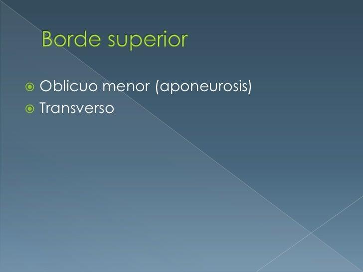 Borde superior <br />Oblicuo menor (aponeurosis)<br />Transverso<br />