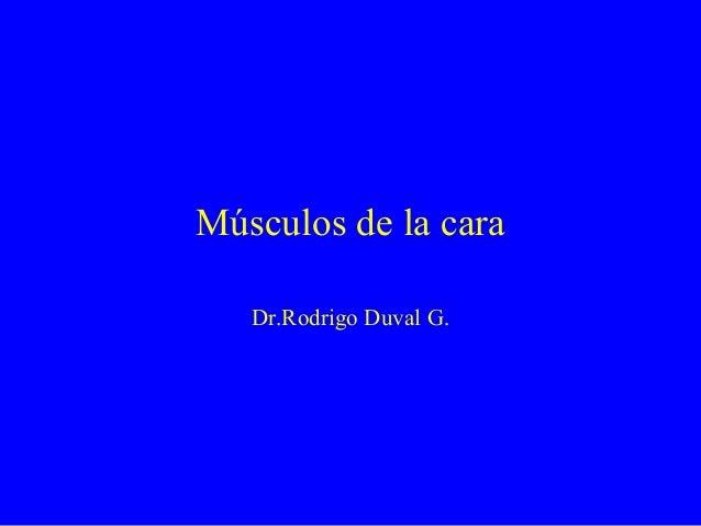 Músculos de la caraDr.Rodrigo Duval G.