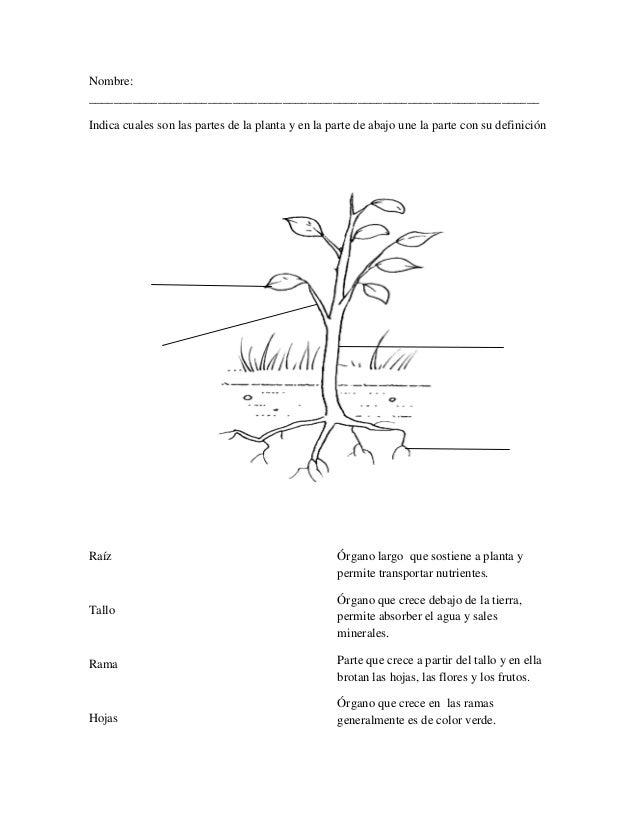 Clase ciencias 2 (alimentación de las plantas)