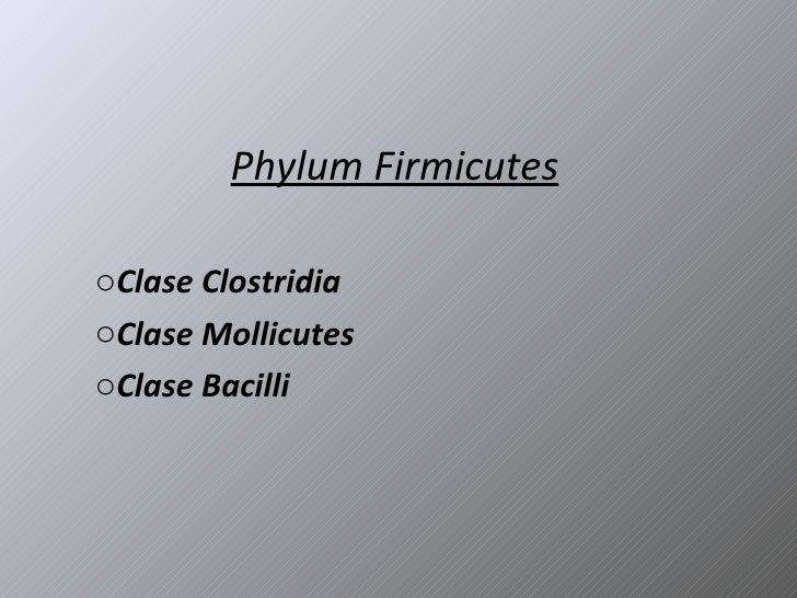 Phylum Firmicutes <ul><li>Clase Clostridia </li></ul><ul><li>Clase Mollicutes </li></ul><ul><li>Clase Bacilli </li></ul>