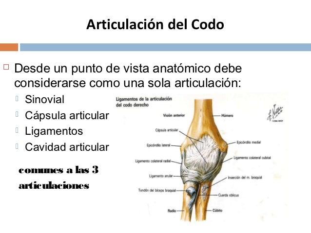 articulacin-del-codo-4-638.jpg?cb=1350504543
