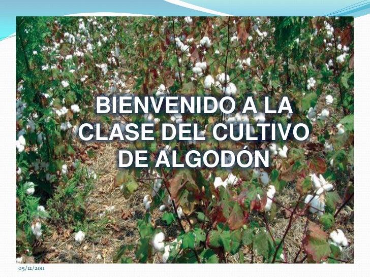 BIENVENIDO A LA             CLASE DEL CULTIVO                DE ALGODÓN05/12/2011