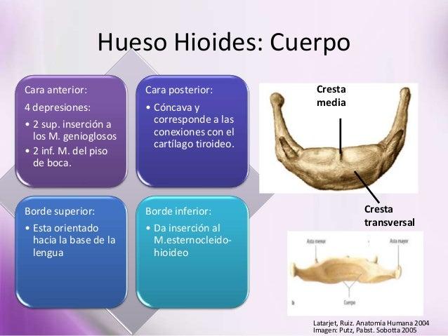 Clase de anatomia 04 03 (realizadas por la Prof. Diana Pernía)