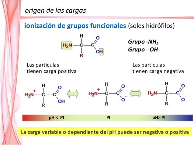 Punto isoeléctrico se define como el pH en el cual el número de cargas positivas se iguala al número de cargas negativas q...