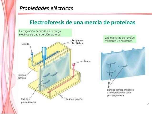 Baja FI Alta FI Electrolito Espesor (M) (nm) 0.00001 100 0.001 10 0.1 1 La doble capa se contrae a medida que aumenta la f...