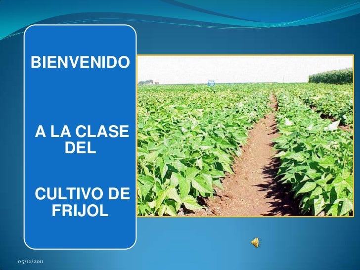 BIENVENIDO      A LA CLASE         DEL      CULTIVO DE       FRIJOL05/12/2011