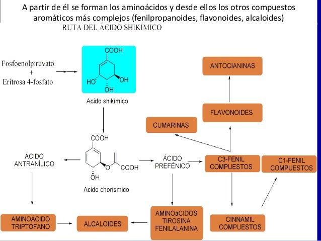 que son los alcaloides esteroidales