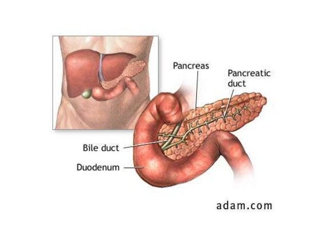 Clase de páncreas