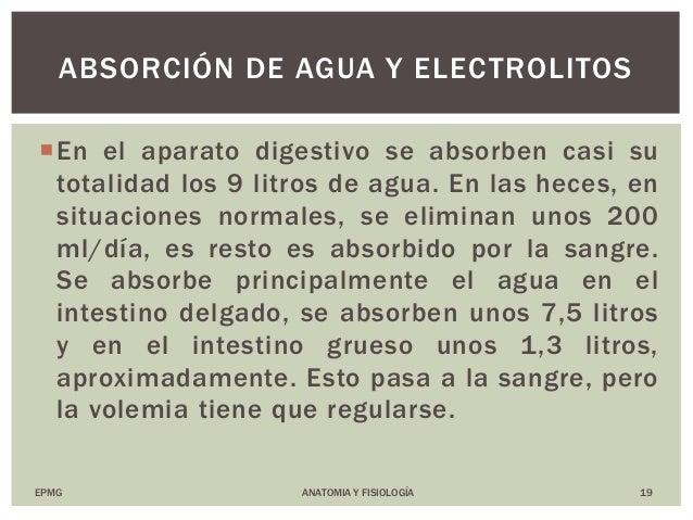 ANATOMIA Y FISIOLOGIA NOCTURNO Y SABATINO: Digestion y Absorción de N…