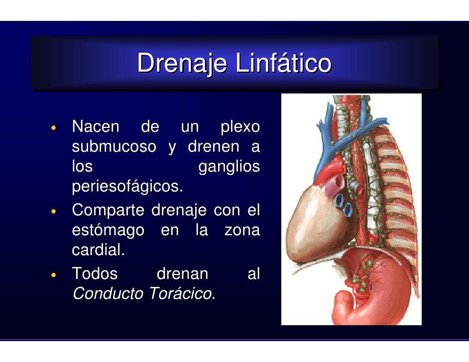 Clase esofago2008
