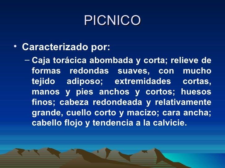 PICNICO <ul><li>Caracterizado por:  </li></ul><ul><ul><li>Caja torácica abombada y corta; relieve de formas redondas suave...