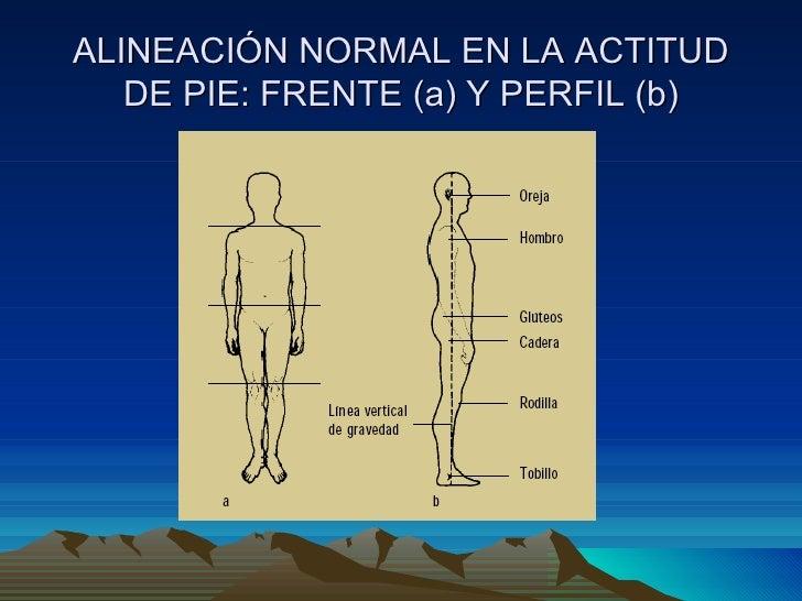 ALINEACIÓN NORMAL EN LA ACTITUD DE PIE: FRENTE (a) Y PERFIL (b)