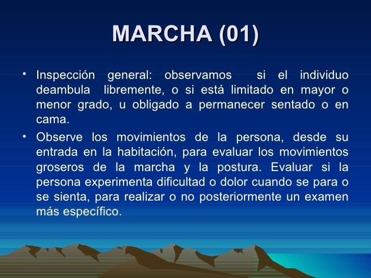 MARCHA (01) <ul><li>Inspección general: observamos  si el individuo deambula  libremente, o si está limitado en mayor o me...