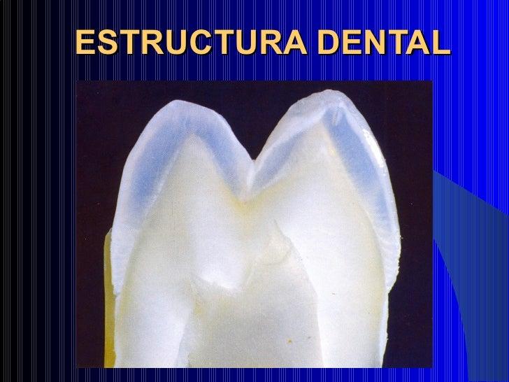 Clase facultad 1 histologia dentaria