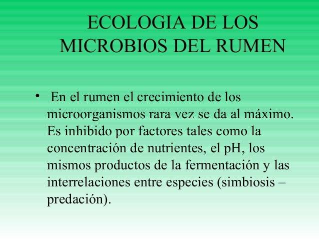 ECOLOGIA DE LOS MICROBIOS DEL RUMEN • En el rumen el crecimiento de los microorganismos rara vez se da al máximo. Es inhib...