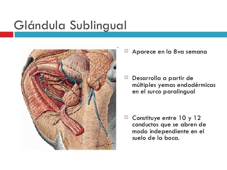 De La Glándula Submaxilar - My Own Email
