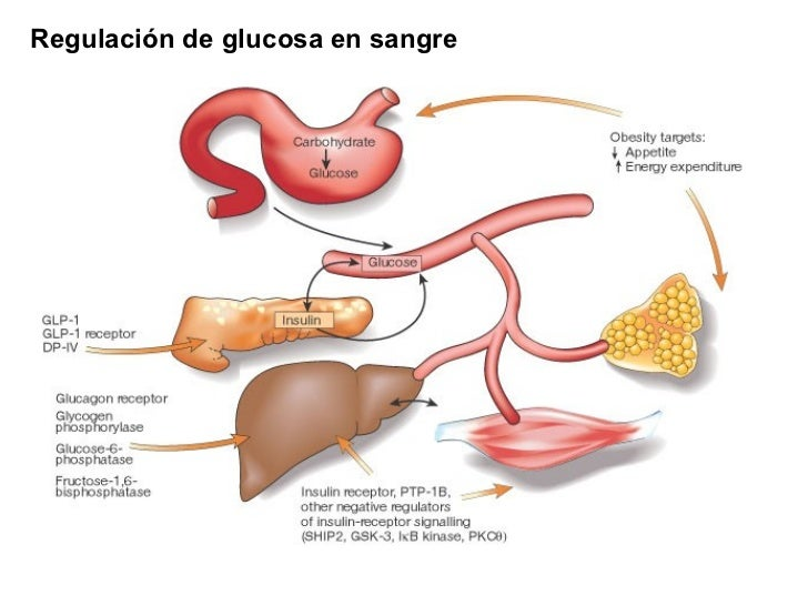 Clase glucógeno
