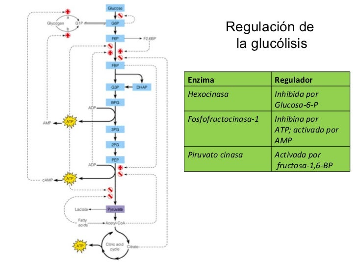 Clase glucólisis