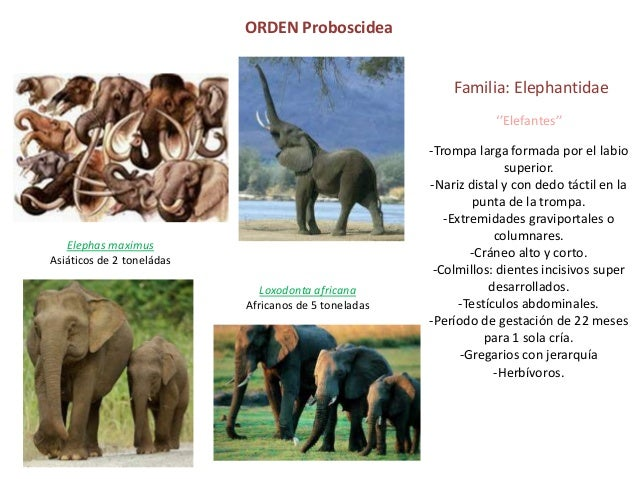 ORDEN PROBOSCIDEA EPUB DOWNLOAD