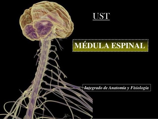 U1 C3 Medula Espinal y Tractos