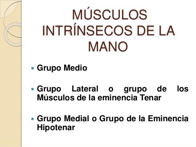 MÚSCULOS INTRÍNSECOS DE LA MANO  Grupo Medio  Grupo Lateral o grupo de los Músculos de la eminencia Tenar  Grupo Medial...