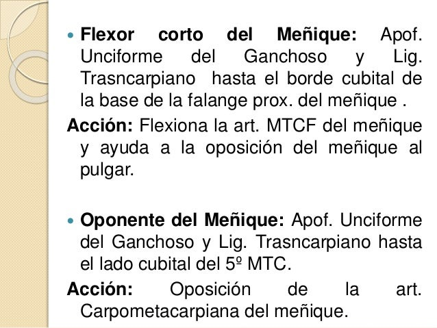  Grupo Medio:  Lumbricales  Interóseos dorsales y palmares  Grupo Lateral o grupo de los Músculos de la eminencia Tena...
