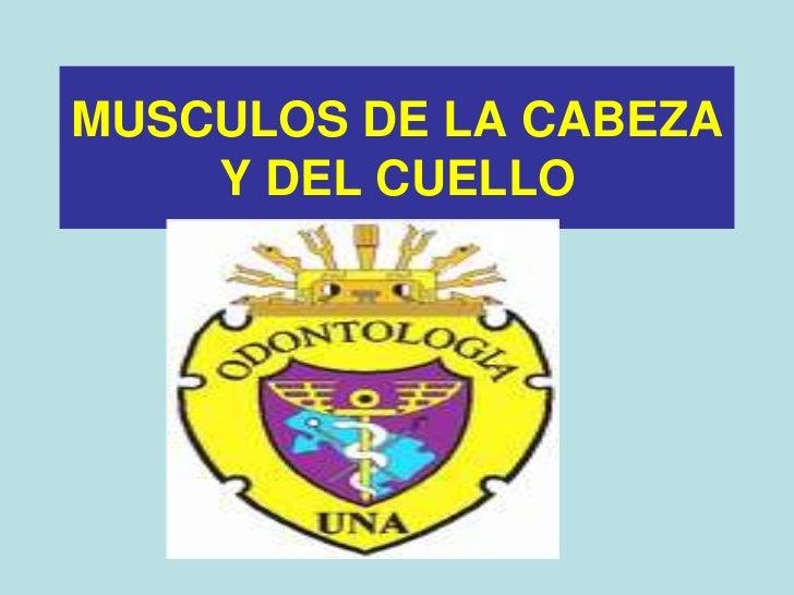 MUSCULOS DE LA CABEZA Y DEL CUELLO<br />
