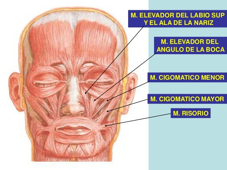 La clínica el este en tyumeni el tratamiento de las hernias intervertebrales