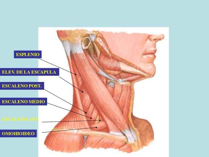 El dolor en el cuello después del sueño el tratamiento