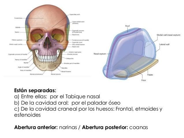 Clase nariz y cpn Diplomado Otorrinolaringología para médicos general…