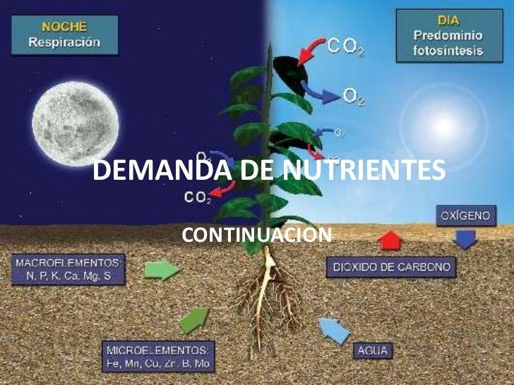 DEMANDA DE NUTRIENTES     CONTINUACION