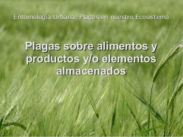 Entomología Urbana: Plagas en nuestro Ecosistema   Plagas sobre alimentos y   productos y/o elementos        almacenados