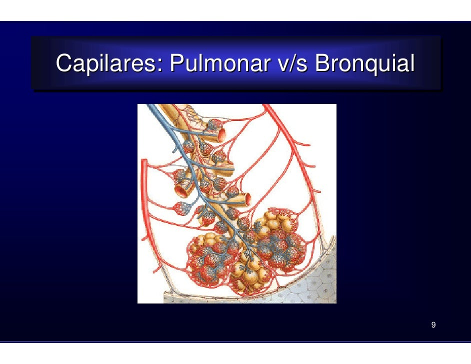 Clase pulmones2008