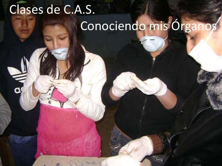 Clases de C.A.S.             Conociendo mis Órganos