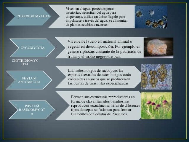 Clases De Microorganismos