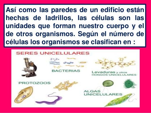 Clases de organismos - Clases de ladrillos ...