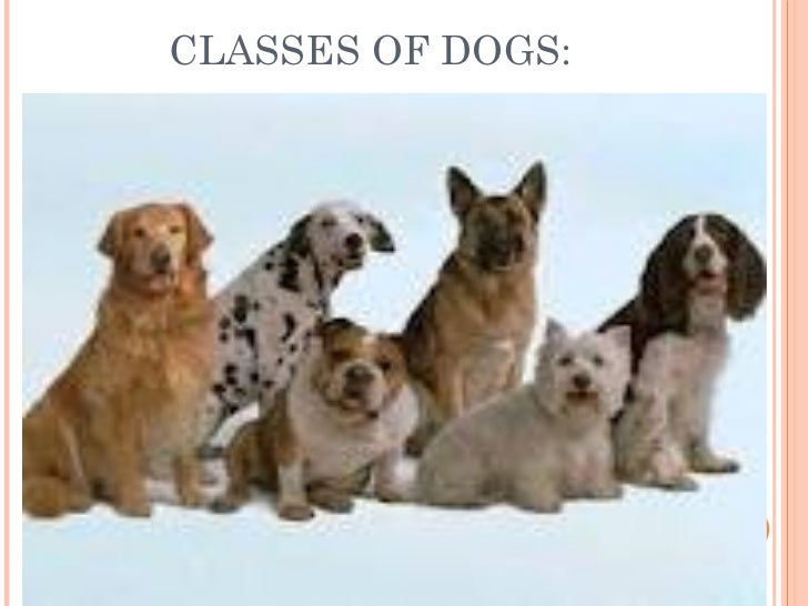 CLASSES OF DOGS: