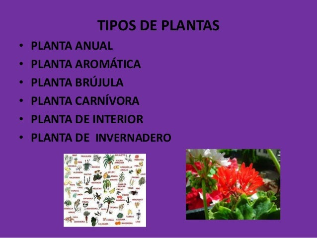 Clases de plantas - Clases de plantas de interior ...