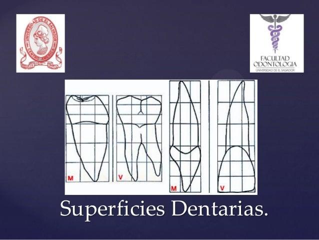 Superficies Dentarias.