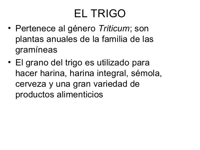 EL TRIGO • Pertenece al género Triticum; son plantas anuales de la familia de las gramíneas • El grano del trigo es utiliz...