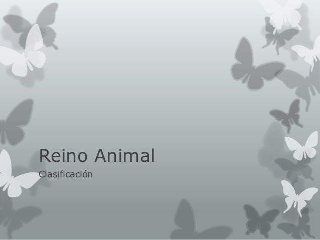 Reino Animal Clasificación