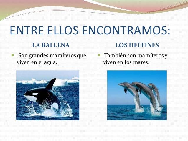 Imagenes De Animales Acuaticos Y Terrestres Para Colorear