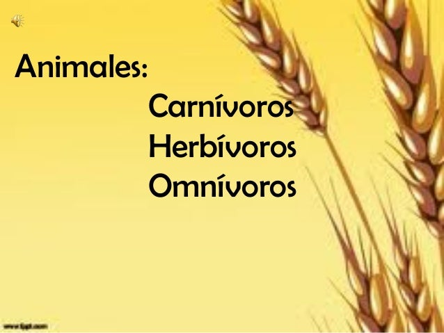 Animales:            Carnívoros            Herbívoros            Omnívoros