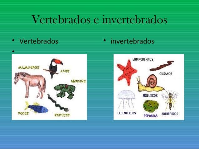 Animales invertebrados: ejemplos y caractersticas - con fotos 12