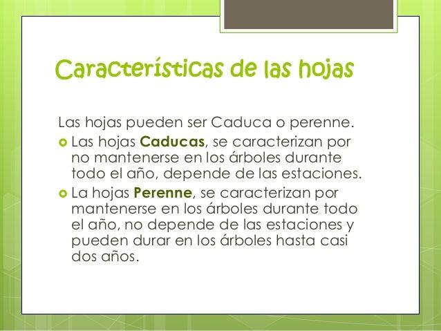 Clasificaci n de las hojas for Las caracteristicas de los arboles