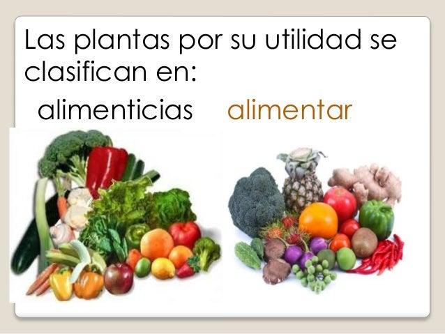 Clasificaci n de las plantas for Utilidad de las plantas ornamentales