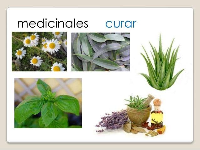 Clasificaci n de las plantas for Plantas ornamentales y medicinales